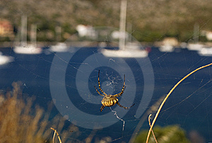 Spiders Web Stock Photo - Image: 15315140