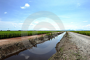 Paddy Field Stock Photos - Image: 15315713