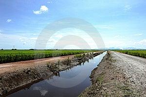 Paddy Field Stock Photos - Image: 15315713
