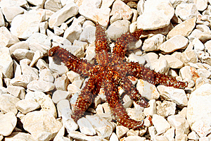 Sea Star Sitting On Stoned Beach Royalty Free Stock Image - Image: 15317716