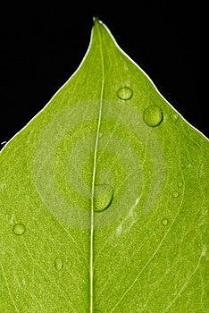 Leaf Royalty Free Stock Photos - Image: 15320238