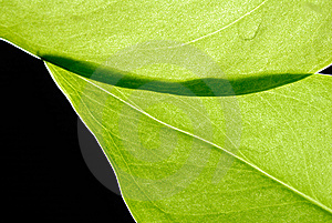 Leaves Stock Photography - Image: 15320272