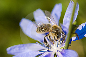 Bee On Flower Stock Images - Image: 15324514