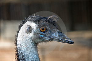 Ostrich Style Stock Photo - Image: 15330310
