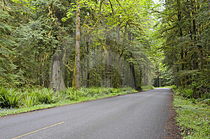 Country Road In Rain Forest Stock Image - Image: 15334971