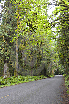 Country Road In Rain Forest Stock Photography - Image: 15334992