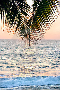 A Palm Tree In Front Of The Sunset Stock Photography - Image: 15341412