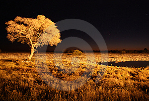 Watering Hole At Night Royalty Free Stock Photo - Image: 15342285