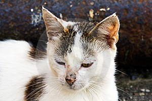 The Homeless Cat Stock Images - Image: 15350264