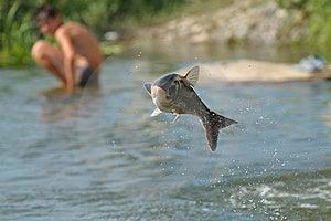 Fish Stock Photos - Image: 15353153