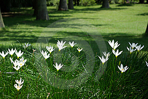 Spring In The Air Royalty Free Stock Photography - Image: 15355247