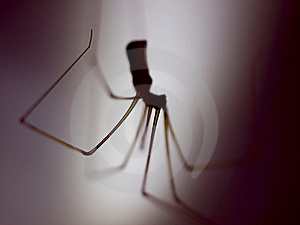 Spider Royalty Free Stock Photography - Image: 15358797