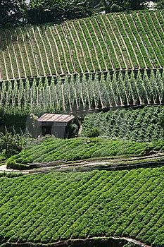 Intensive Crop Farming Stock Photos - Image: 15362763