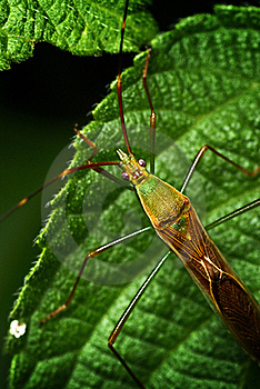 Closed Up On Bug. Royalty Free Stock Photography - Image: 15364317