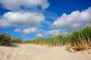 Sand Dune With Grass Stock Image - Image: 15370301