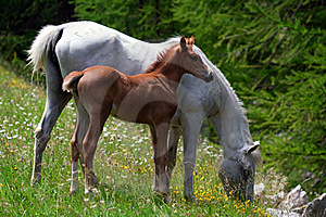 Horses In A Prairie Royalty Free Stock Images - Image: 15374759