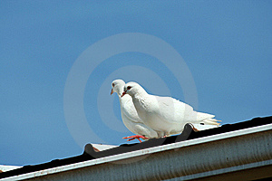 White Doves With Blue Sky Royalty Free Stock Photography - Image: 15381887