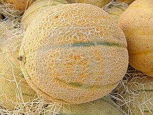 Melon Stock Photography - Image: 15388532