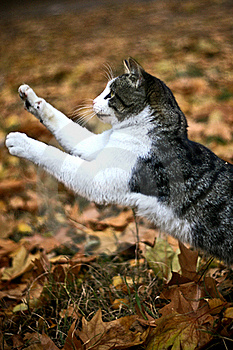 Cat Jumping Stock Image - Image: 15399741