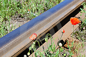 Wild Red Poppies Near Railway Royalty Free Stock Photography - Image: 15403277