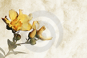 Textured Background With Flowers - Space For Text Stock Photos - Image: 15409503