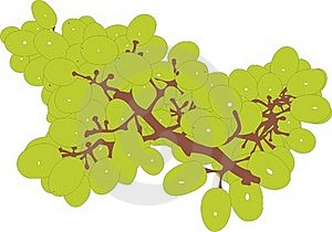 Green Grapes Stock Images - Image: 15410524