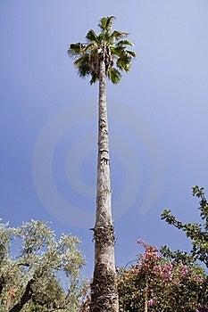 Palm Royalty Free Stock Photo - Image: 15412105