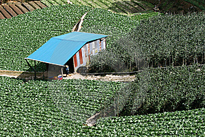 Intensive Crop Farming Royalty Free Stock Photo - Image: 15418835