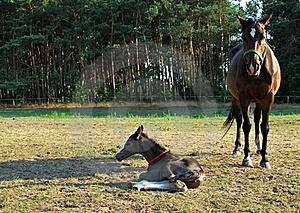 Mare And Newborn Foal Royalty Free Stock Photography - Image: 15420307