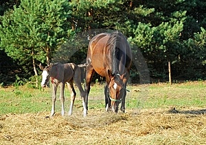 Mare And Foal Stock Photo - Image: 15420550