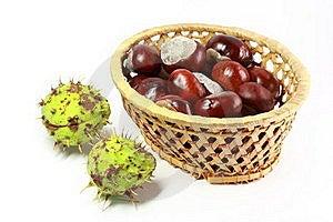 Horse Chestnut Stock Image - Image: 15421021