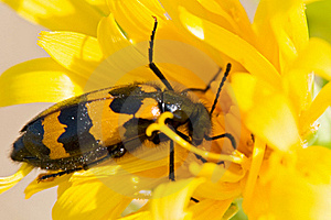 Flying Insect Stock Photography - Image: 15423112