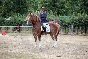 Welsh Cob Pony Stock Photos - Image: 15423593