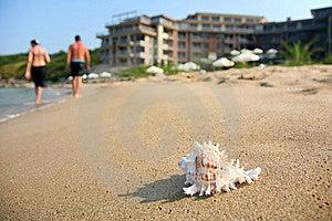 海扇壳 免版税库存照片 - 图片: 15425258