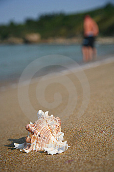 Cockleshell Stock Images - Image: 15425274