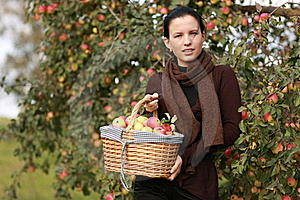 Apple Basket Stock Photos - Image: 15428003