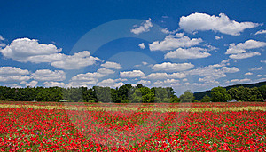 Red Poppy Royalty Free Stock Photos - Image: 15428098