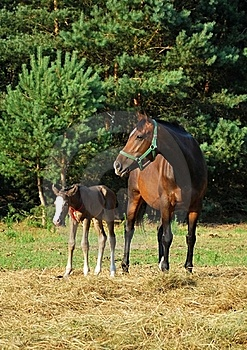 Mare And Foal Royalty Free Stock Photography - Image: 15428827