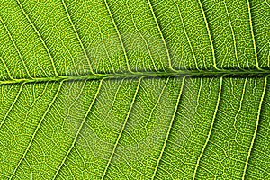 Green Leaf Details From A Stock Image - Image: 15431761