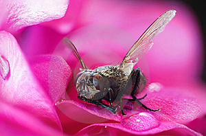 Fly About To Fly Royalty Free Stock Photo - Image: 15441195