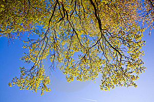 Leaves Of A Tree In Intensive Light Stock Images - Image: 15442174