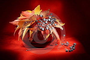 Still Life With Autumn Leaves Stock Photography - Image: 15444942