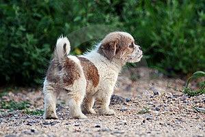 Cute Puppy Stock Photos - Image: 15457033