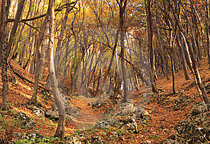 Colourful Forest Stock Photos - Image: 15467063