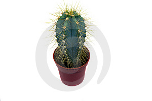 Small Cactus Stock Photos - Image: 15467393