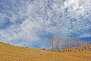 Autumn Hillside. Stock Photography - Image: 15468832