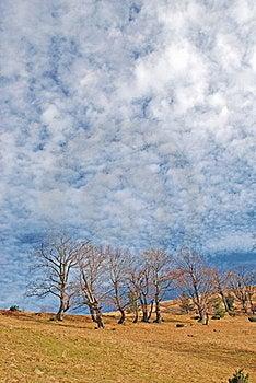 Autumn Hillside. Stock Photography - Image: 15468842