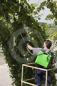 Watering Grapes Stock Photography - Image: 15482112