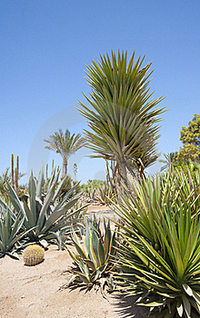 Desert Garden With Various Plants Royalty Free Stock Photography - Image: 15492577