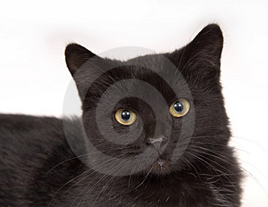 Face of a black cat Stock Photos